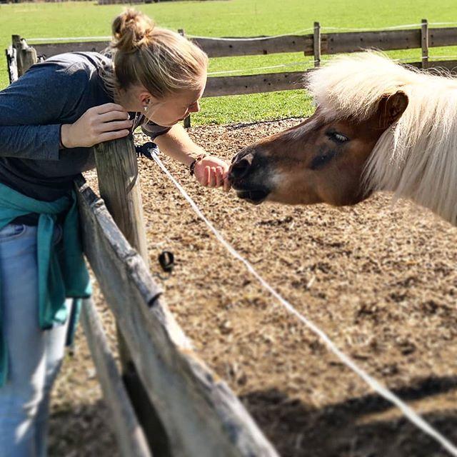 OBERSTDORF Als ich letztens in Oberstdorf spazieren war, bin ich an diesem kleinen süßen Frechdachs vorbei gekommen. Die Kühe waren leider ein wenig weit weg, aber ich finde generell Tiere auf einem Spaziergang machen alles noch ein wenig schöner und lassen einen dir Welt um sich vergessen. Wer von euch ist denn noch so ein Tierliebhaber? . . #ponyliebe #oberstdorf #allgäu #wandern #spazieren #wanderlust #tierliebe #mikroabenteuer #dreitageweg #wochenendtrip #kurzreise #kurztrip #outdoor #draußen #alpen #abenteuerlust #pony