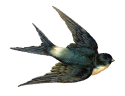 ctl-sparrow.png