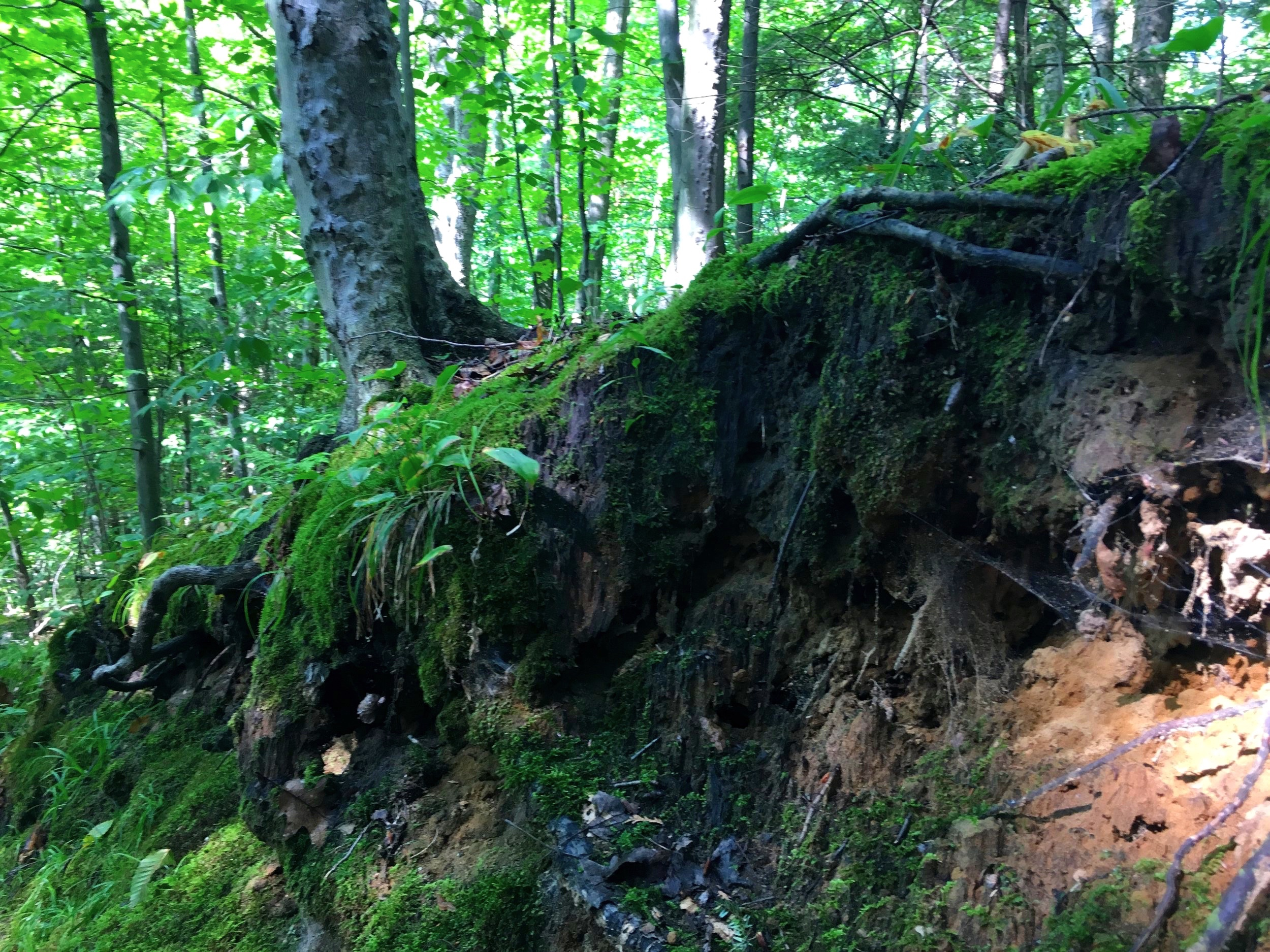 HAPPY VALLEY FOREST HIKE ONLY MINUTES FROM OUR STUDIO