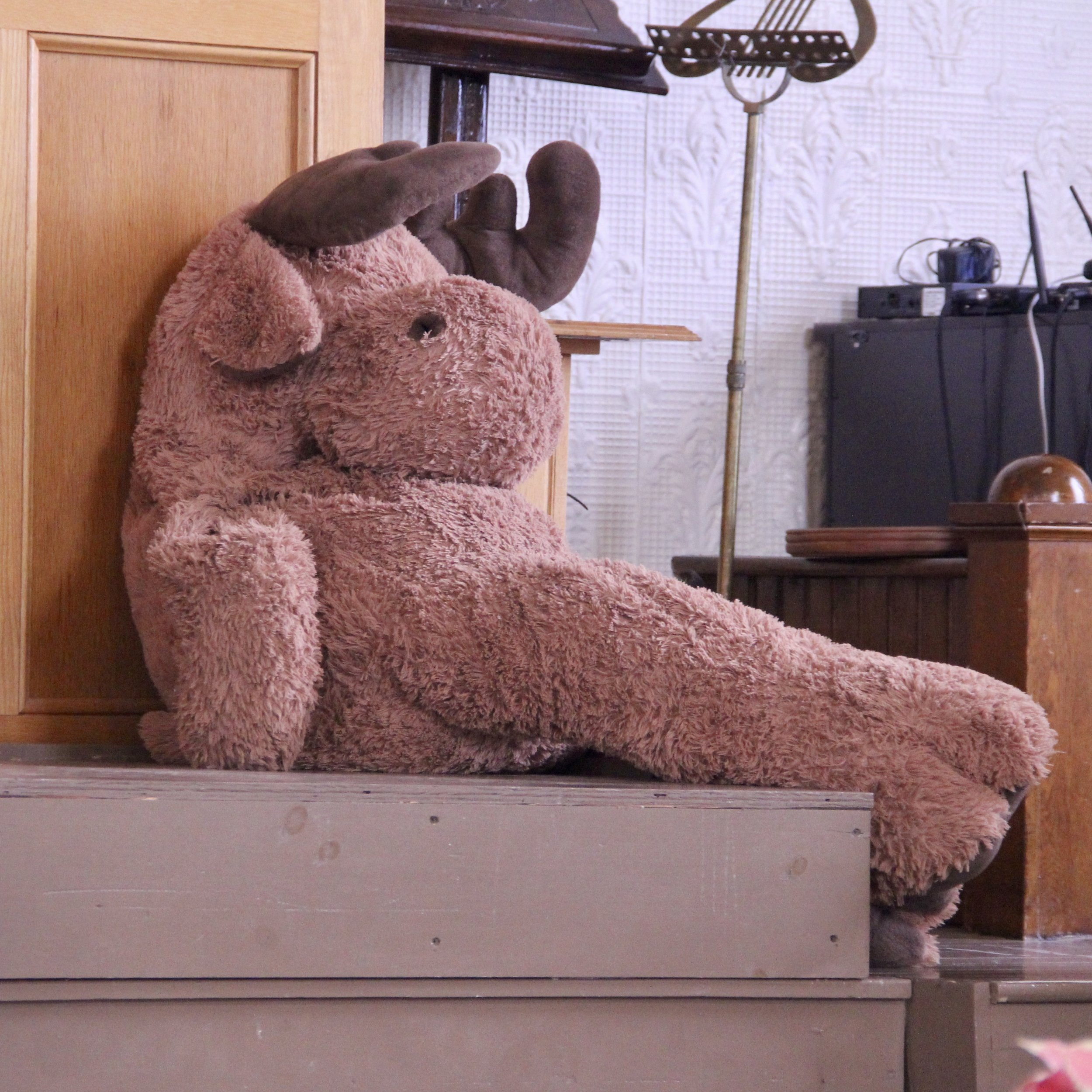 Don't you have a Moose in your Christmas Pageant?