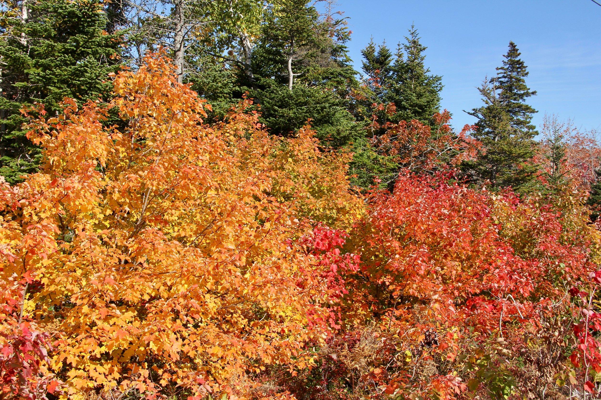 Autumn in Cape Breton