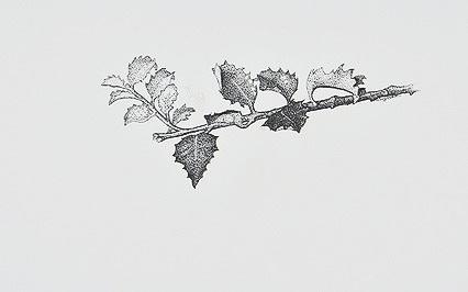 427_Branch.jpg