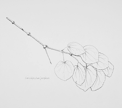 427_Branch_with_leaves.jpg