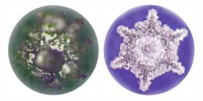 An ice crystal from tap water (right), and an ice crystal from gemstone water (Left)
