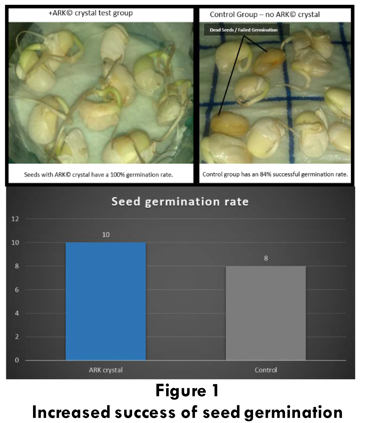 seeds1-2.png
