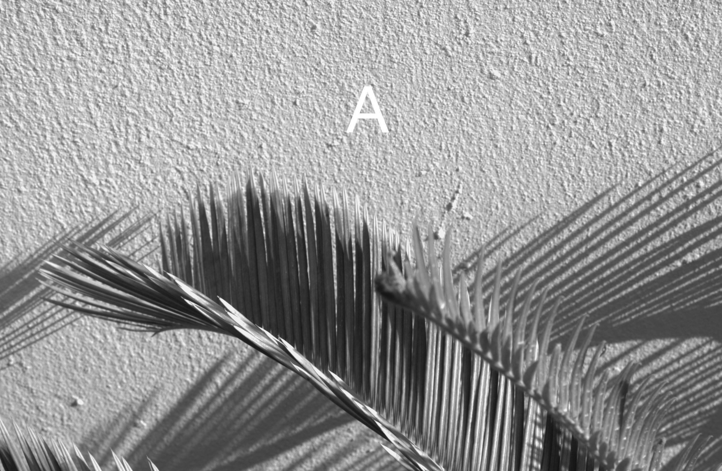 Leica-2.jpg