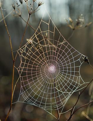 Web 2.png