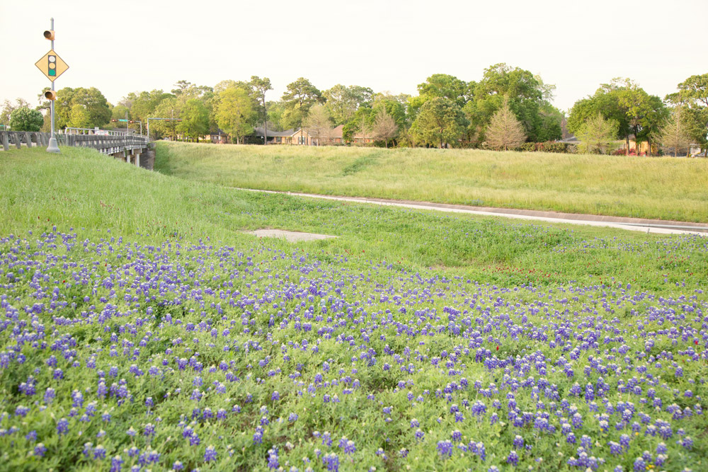 houston-bluebonnet-location.jpg