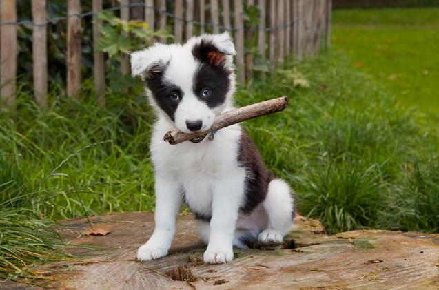 Cute-dog-names-1.jpg