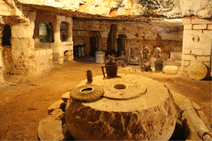 MASSERIA BRANCATI-Saturday morning time - In the country side of Ostuni you can discover the ancient Masseria Brancati, where you'll visit the monumental olive grove with some olive threes 3000 years old and the amazing underground oil mill built in Pre Roman time. Tasting of different variety of bio olive oil.