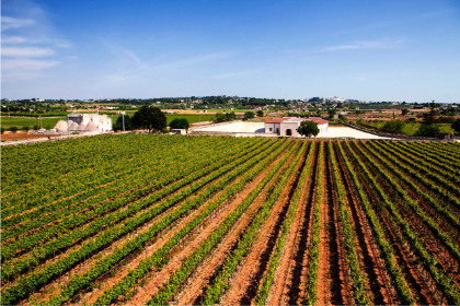 WINE TOUR IN ITRIA VALLEY / TOUR & WINE TASTINGIN A WINERY-Thursday half day - Tour of the charming old town of Martina Franca , full of Barocco Palaces. Guided tasting of typical products and wines after a visit of an old Masseria with Trulli built in sixth century.