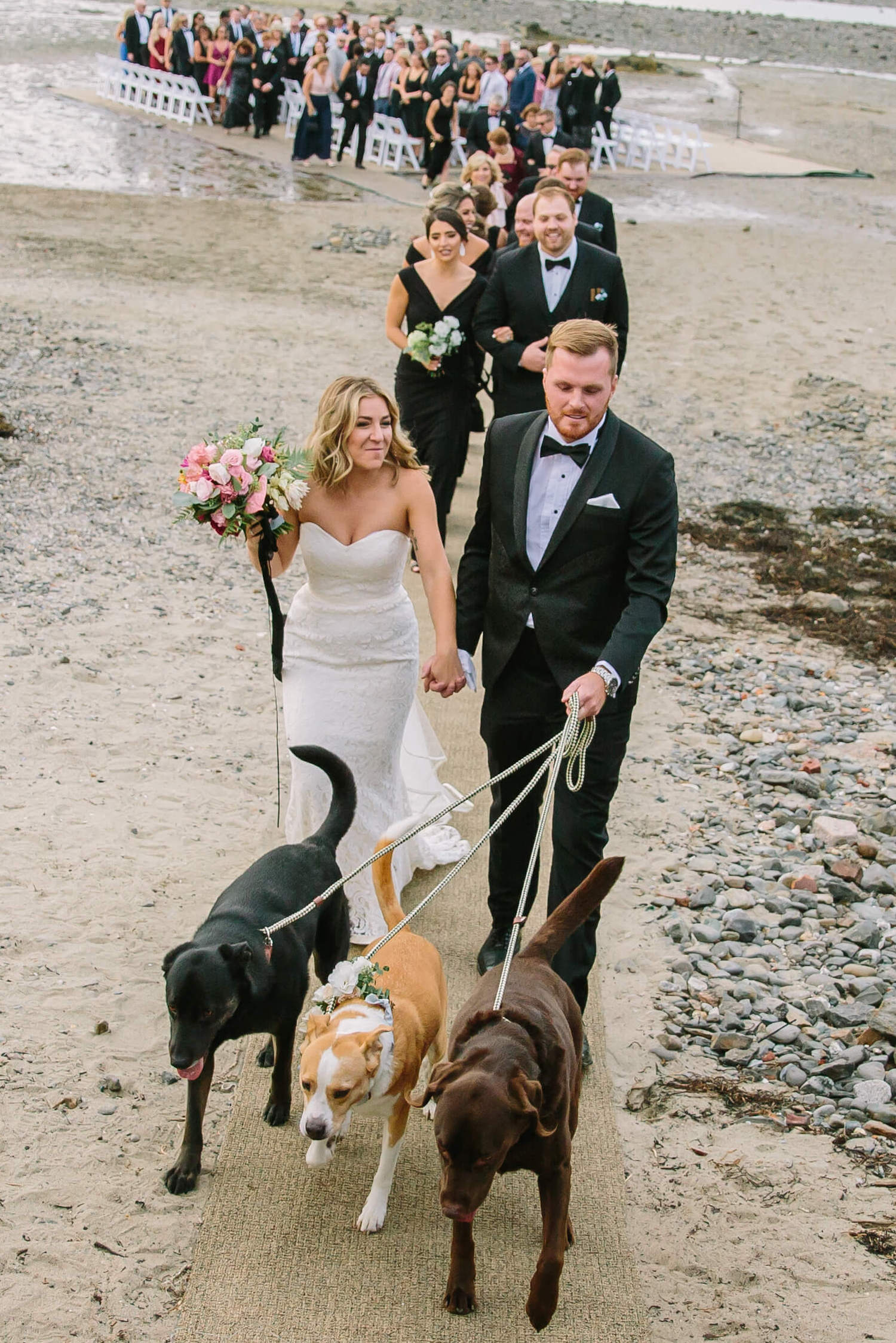 dogs-in-wedding-party-pictures.jpg