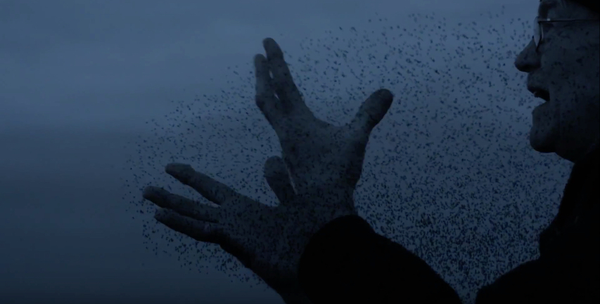 drywater-murmuration-film-4.jpg