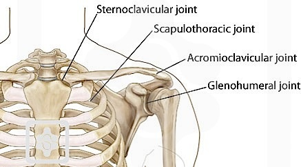 Shoulder Complex - Image from  https://www.physio-pedia.com/Shoulder
