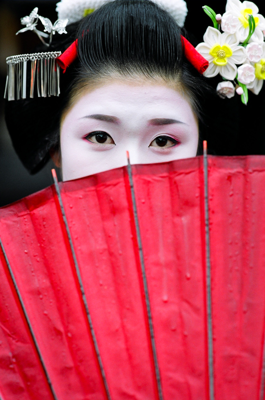 The cover of Geisha and Maiko of Kyoto without text