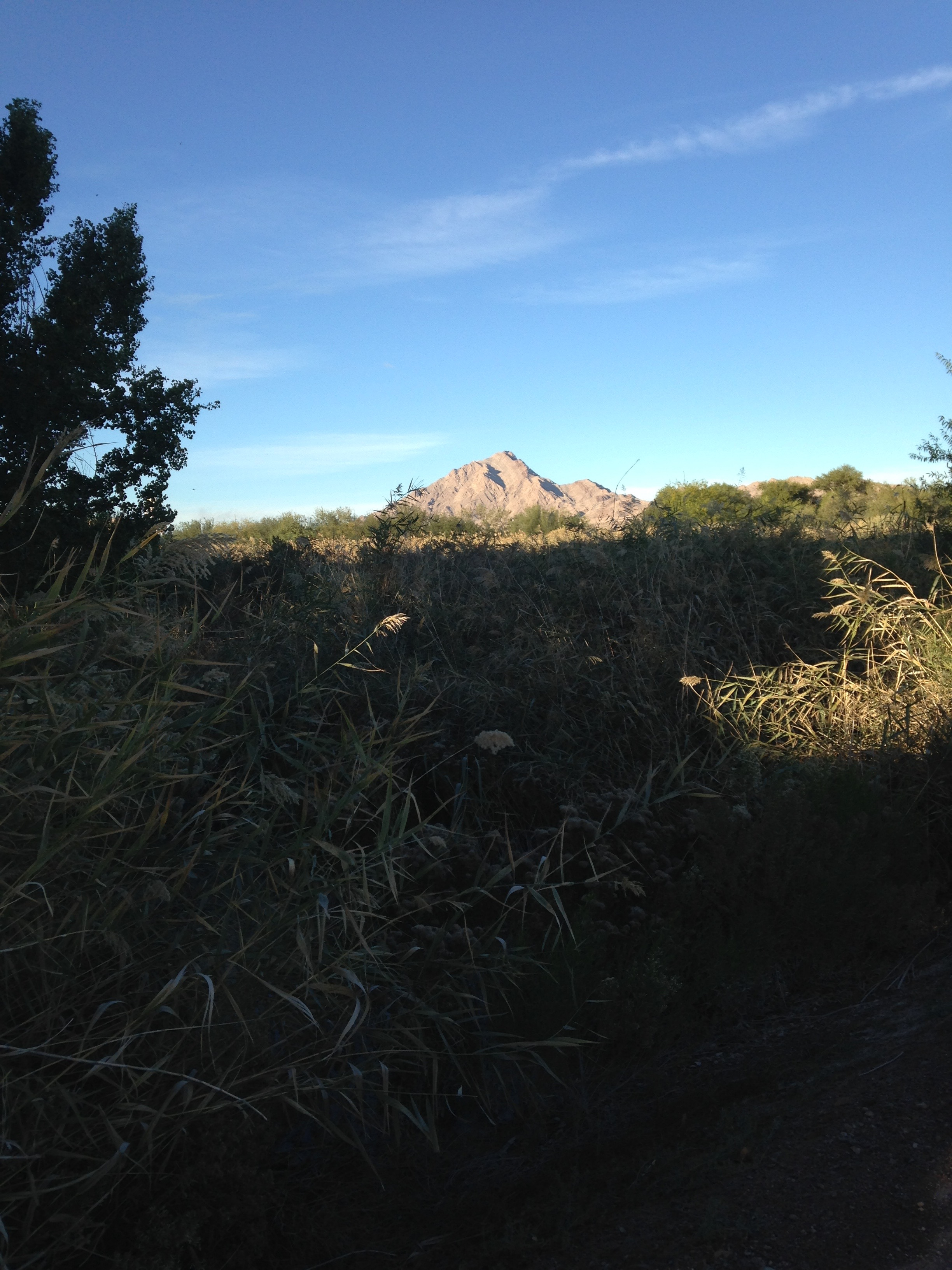Wetlands Park with a view of Sunrise Mountain