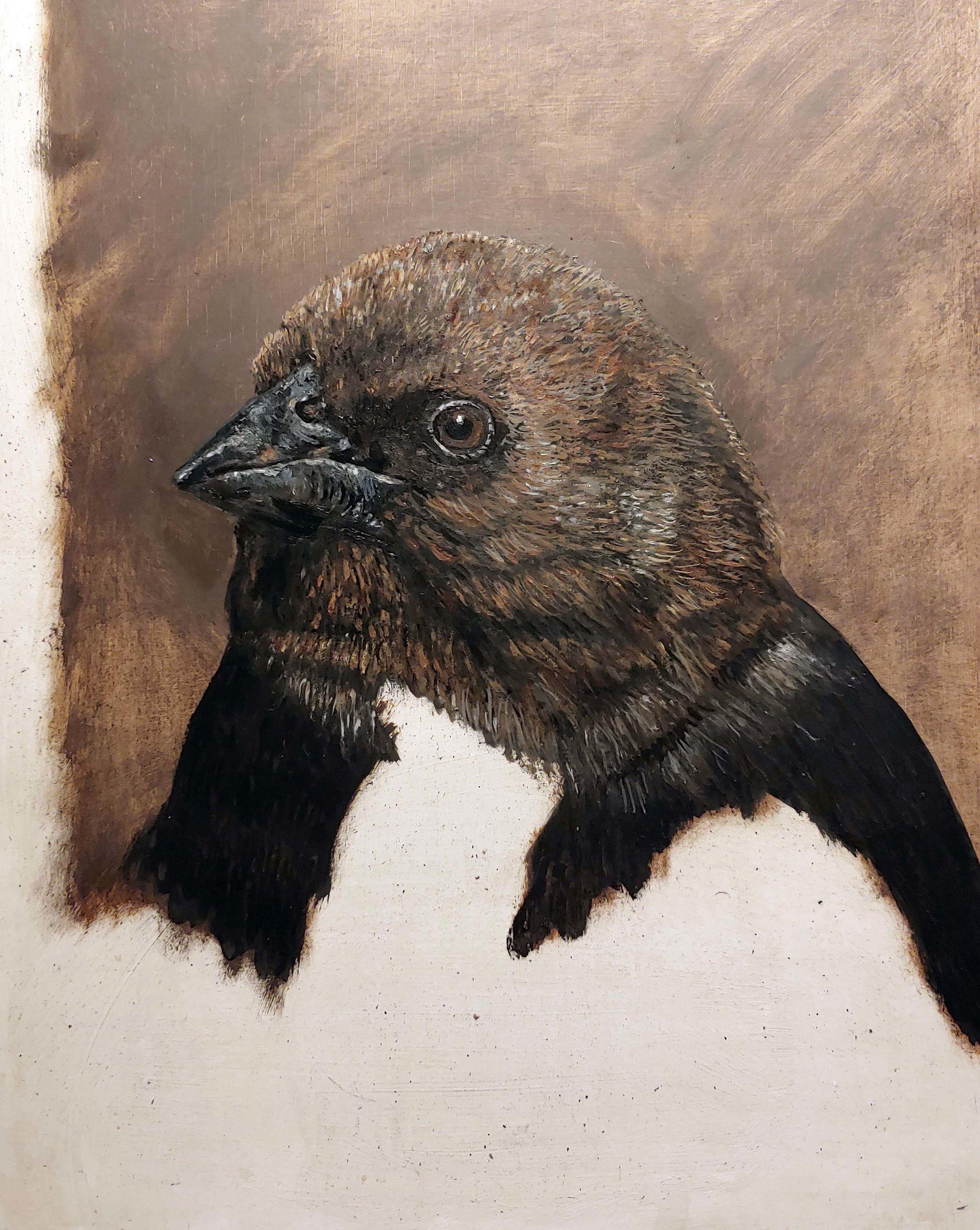 Darren Johnson,  Brown-headed Cowbird after Gilbert Stuart , oil on panel, 2019. Photo Darren Johnson.