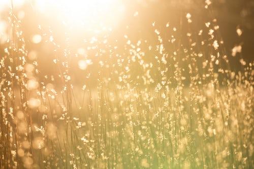 field with sunlight.jpeg