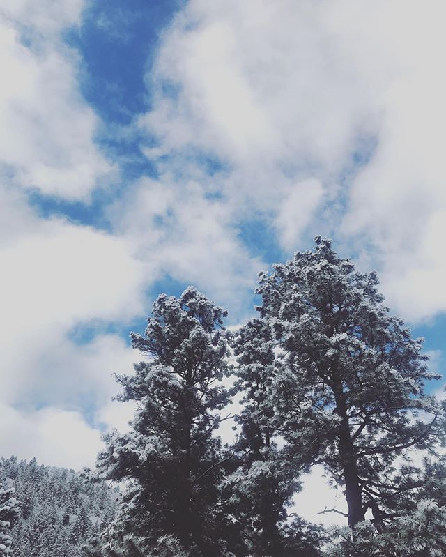 Still snowy in Telluride... happy Spring (??) everyone 😉❄️ and stay cozy! . . . . #thesteepingleaf #mountainsky #stayingcozy #drinkingtea #teatime #teainbed #teablends #weekendvibes #ponderosa #sky