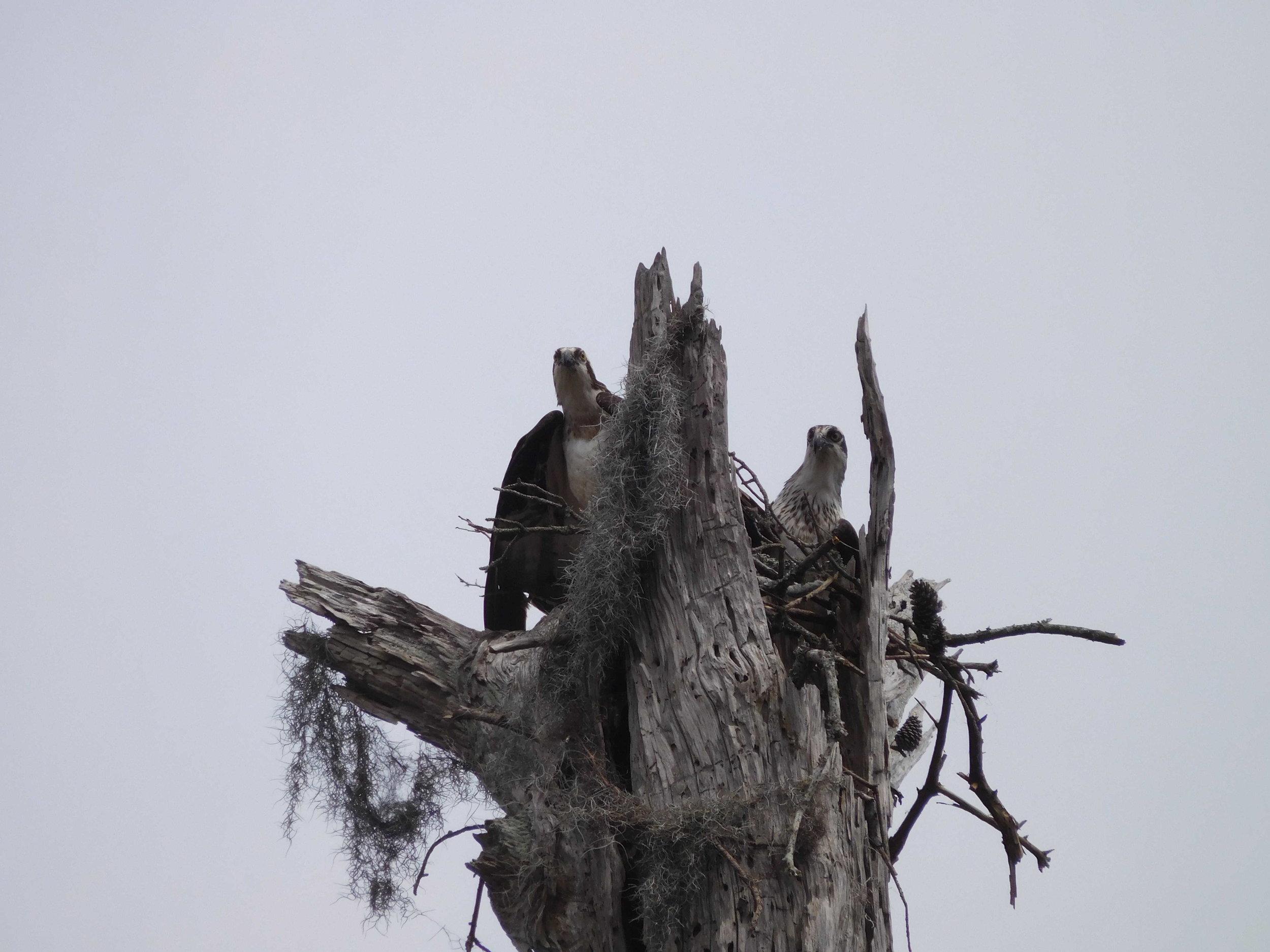wildlife-canebayou.jpg