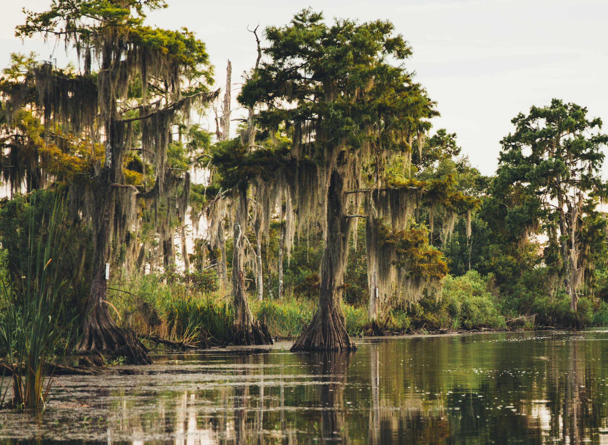 swamp.jpg
