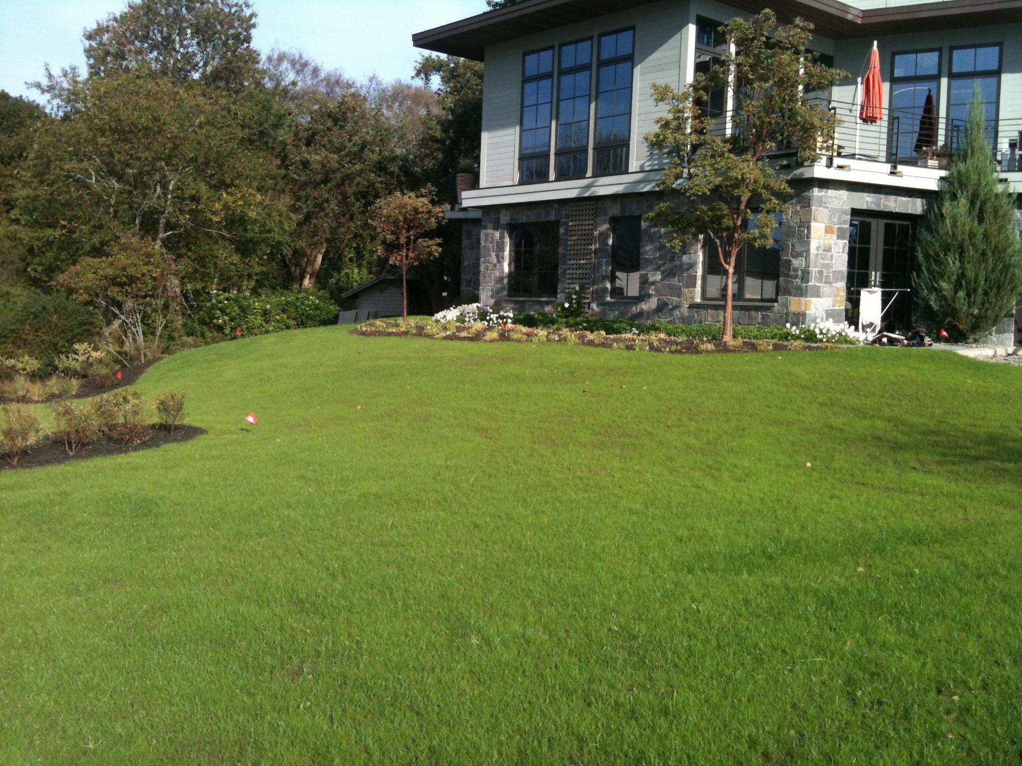 Low Maintenance Lawn.JPG