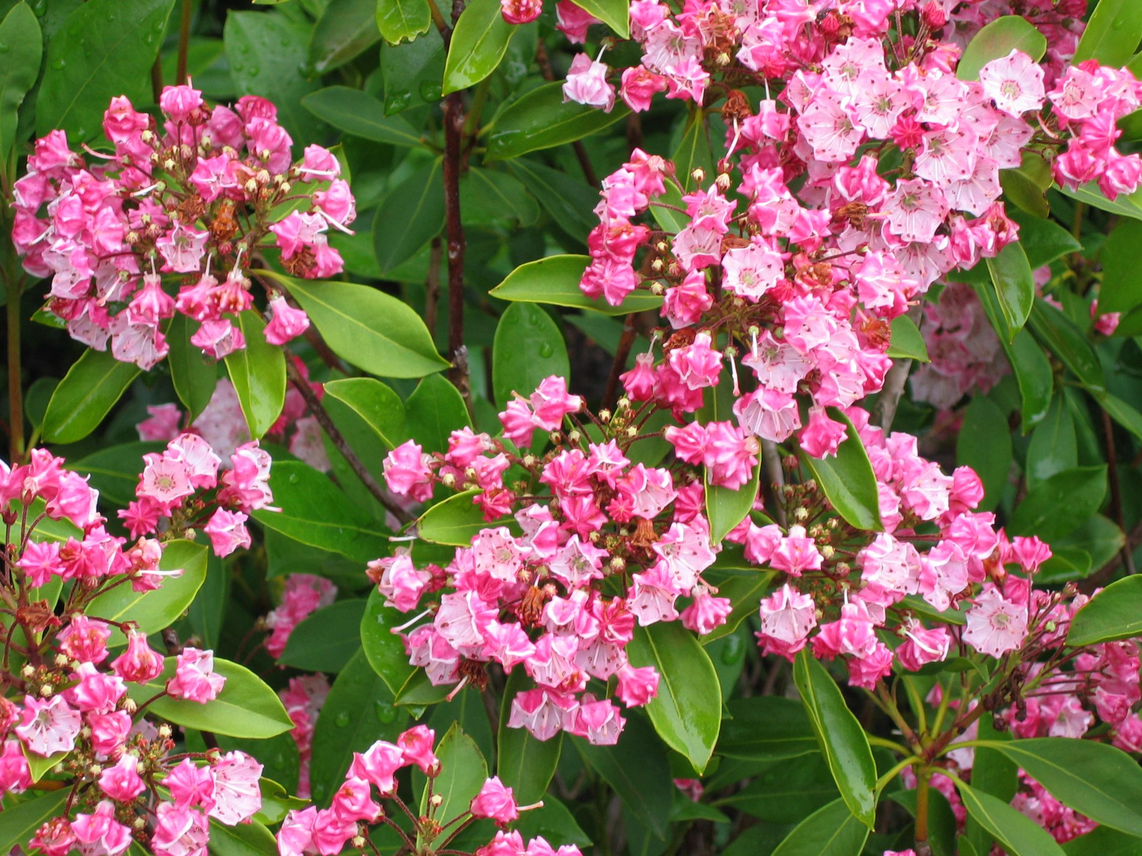 Plants Blooming (6).JPG