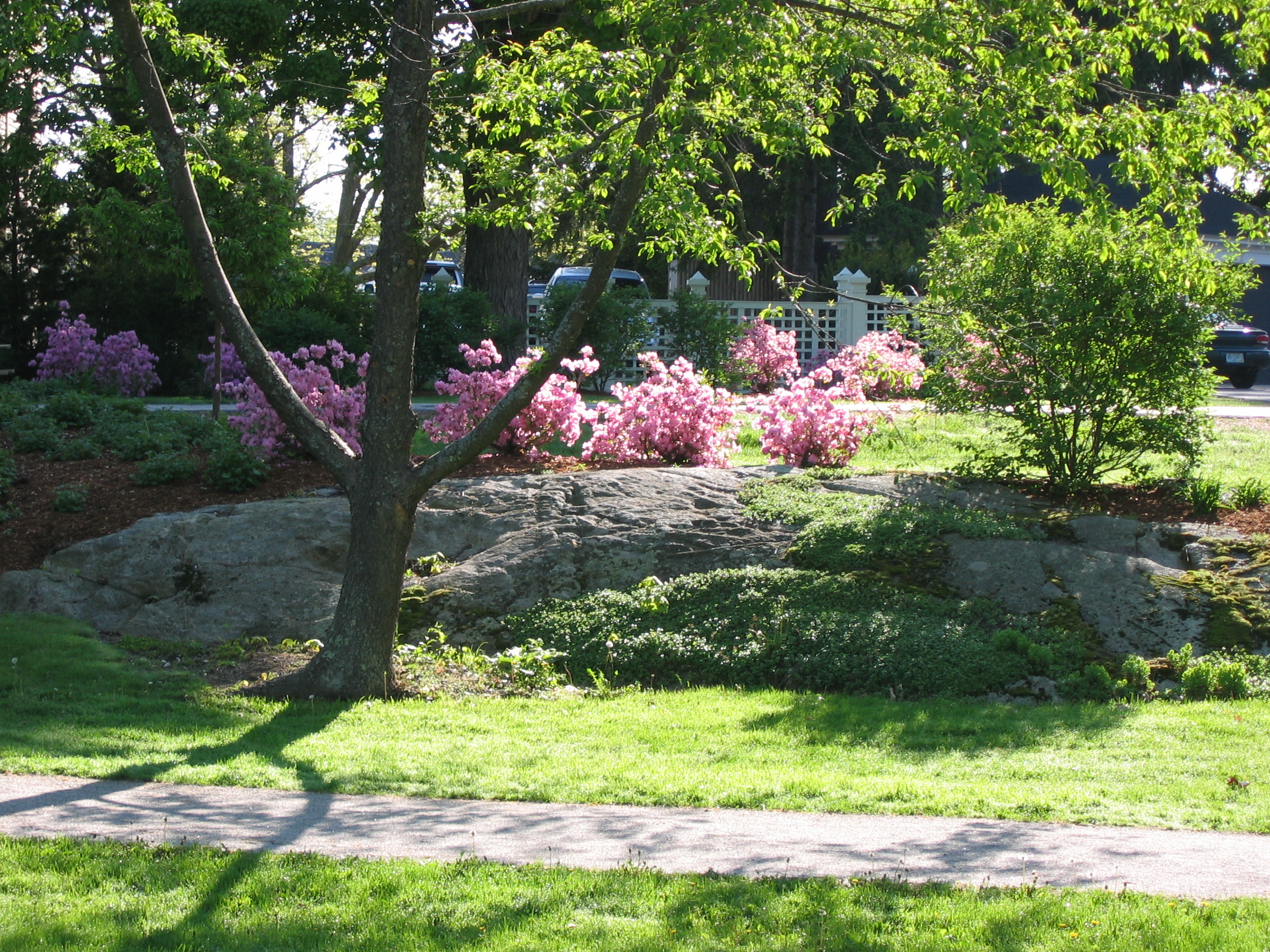 Plants Blooming.JPG