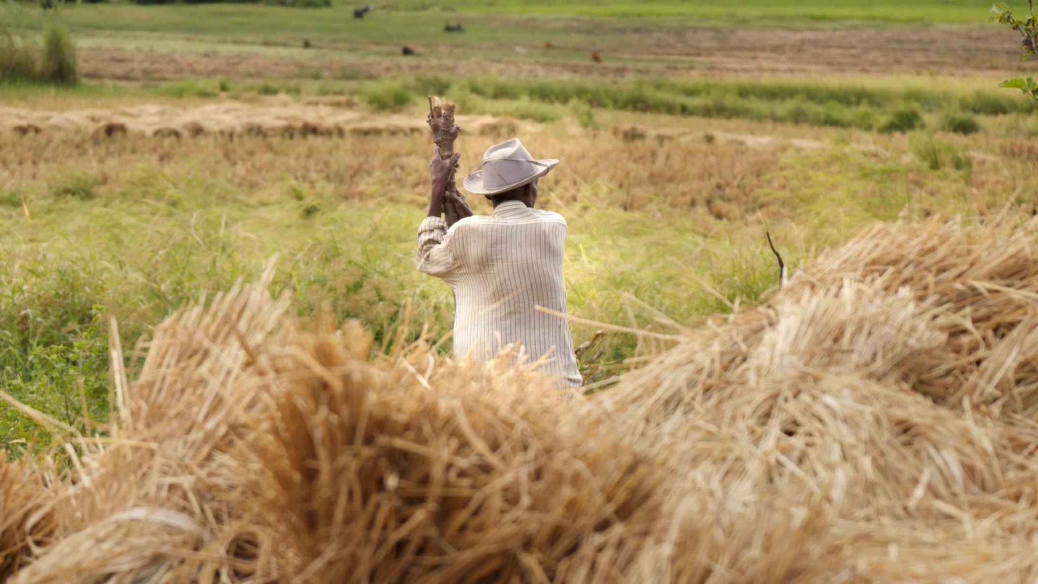 Farmer.jpg