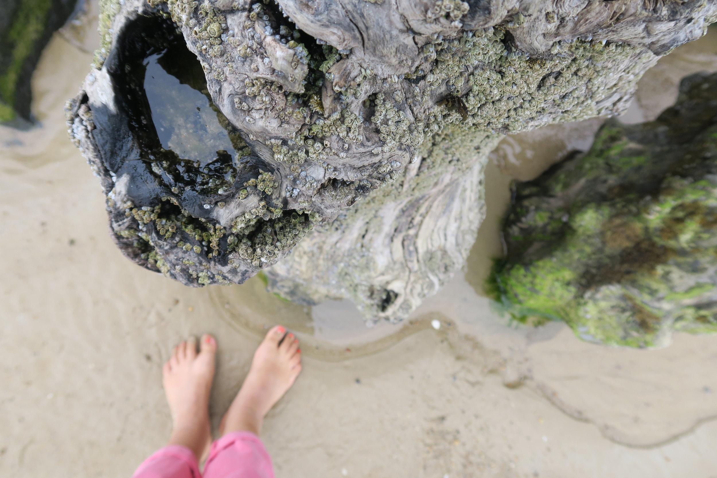 Sur la plage de Saint Malo, mes racines bretonnes...