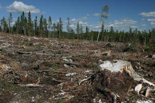 deforestation-sep09.jpg