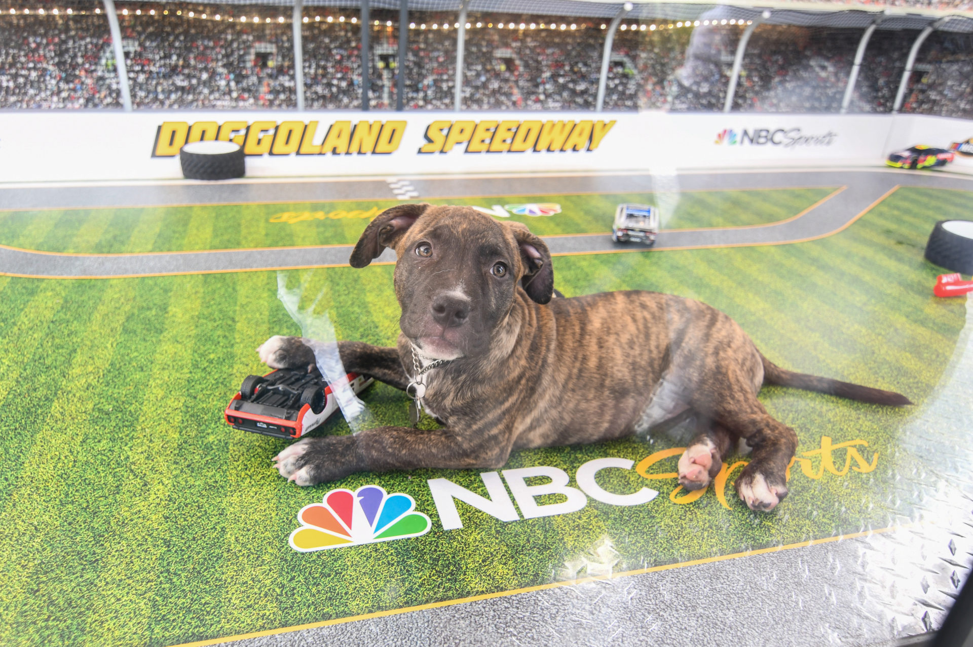 OHM-NASCAR Pups-Top Selects-0195.jpg