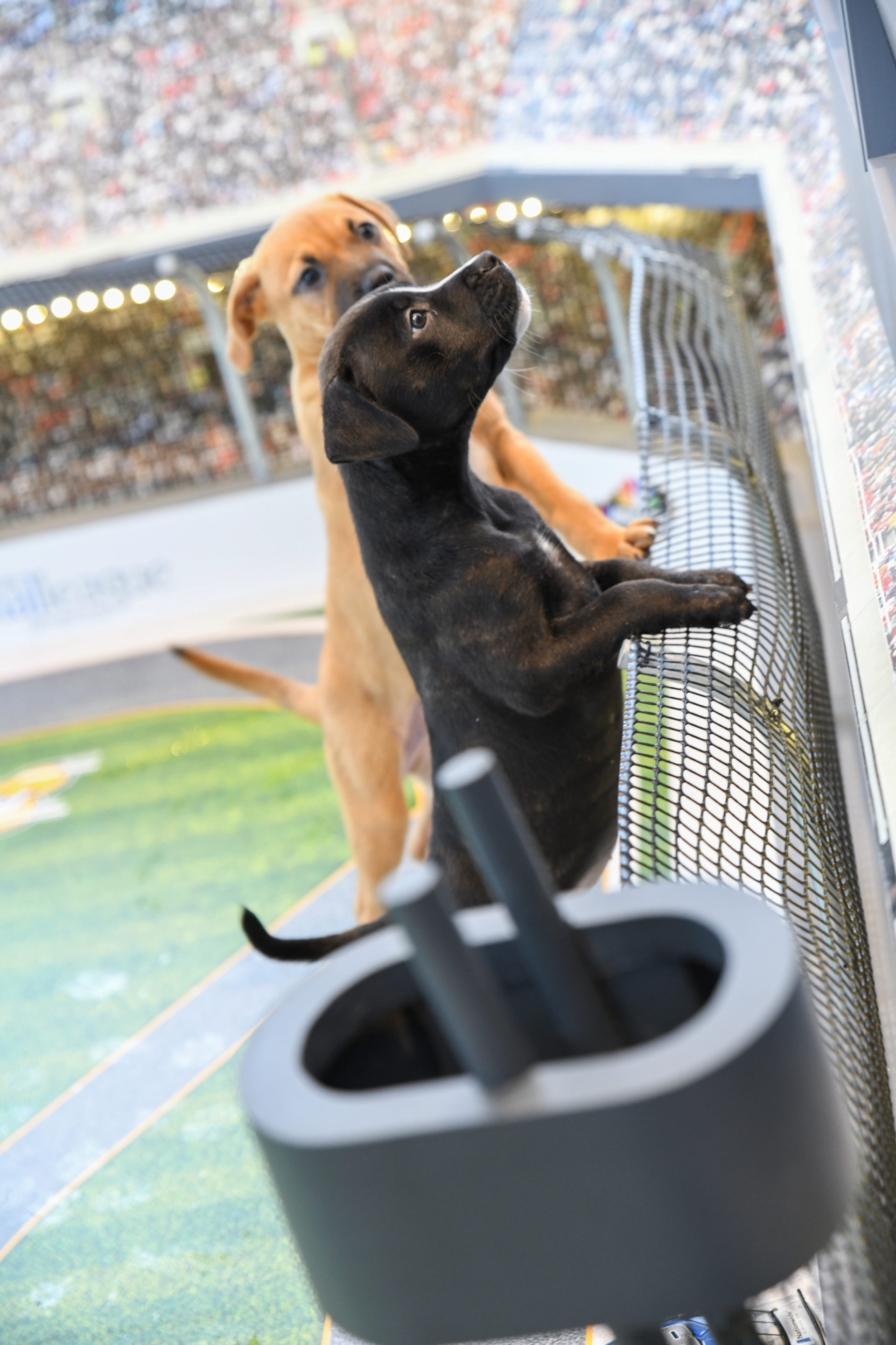 OHM-NASCAR Pups-Top Selects-1060.jpg