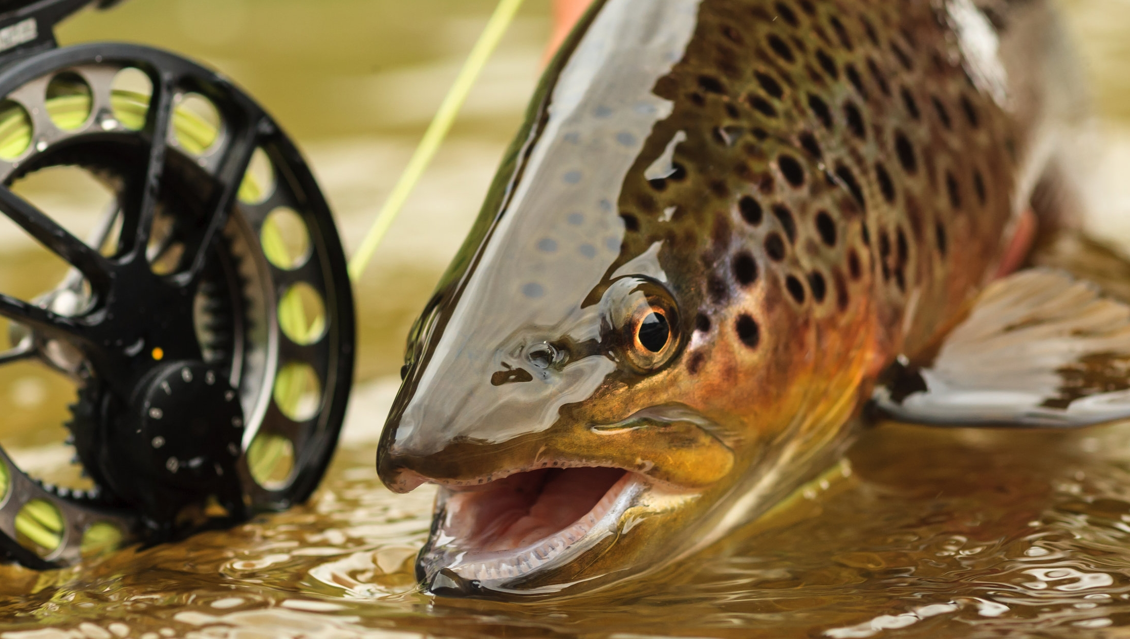 FISH - ANGLERS WILL BE DELIGHTED BY THE OPPORTUNITY TO CAST FOR TROPHY SIZE TROUT IN THE NEARBY PROVO AND WEBER RIVERS.