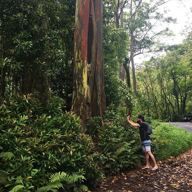 Rainbow Eucalyptus 🍃🌴🌊