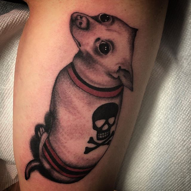 Chihuahua baby! Done by the baby @babyjohntattoo !! Come in this Sunday and get something awesome! John will be there from 12 to 6 doing walk ins !! See you there. #anchorsaweightattoo #bradleybeachnj #beachtattoos #chihuahuatattoo #traditionaltattoos #boldwillhold #njtattooshop #njtattooartist #njtattoos #kingpintattoosupply #whiterosetattoosupply #tradworker #