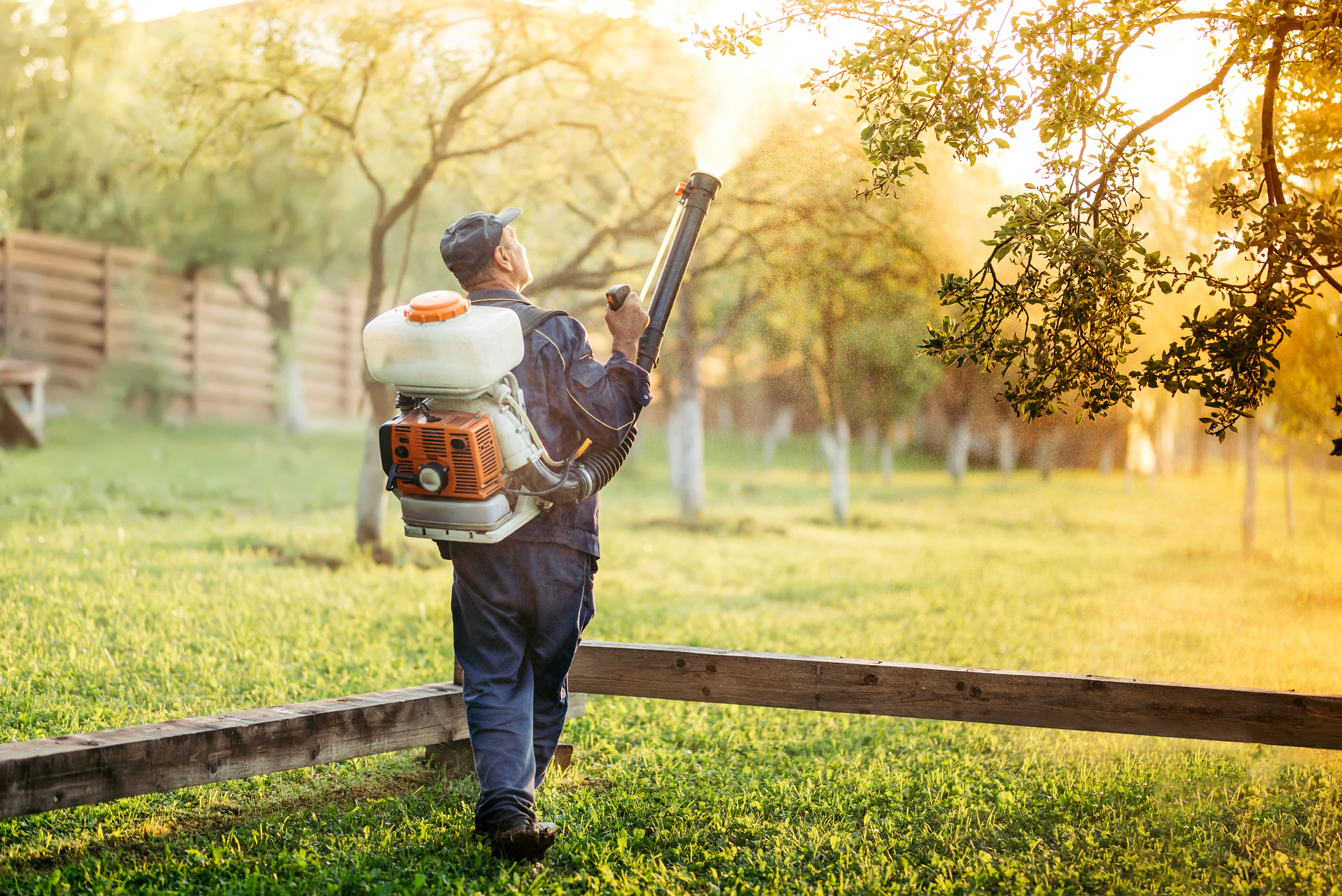 lawn-pest-control.jpg