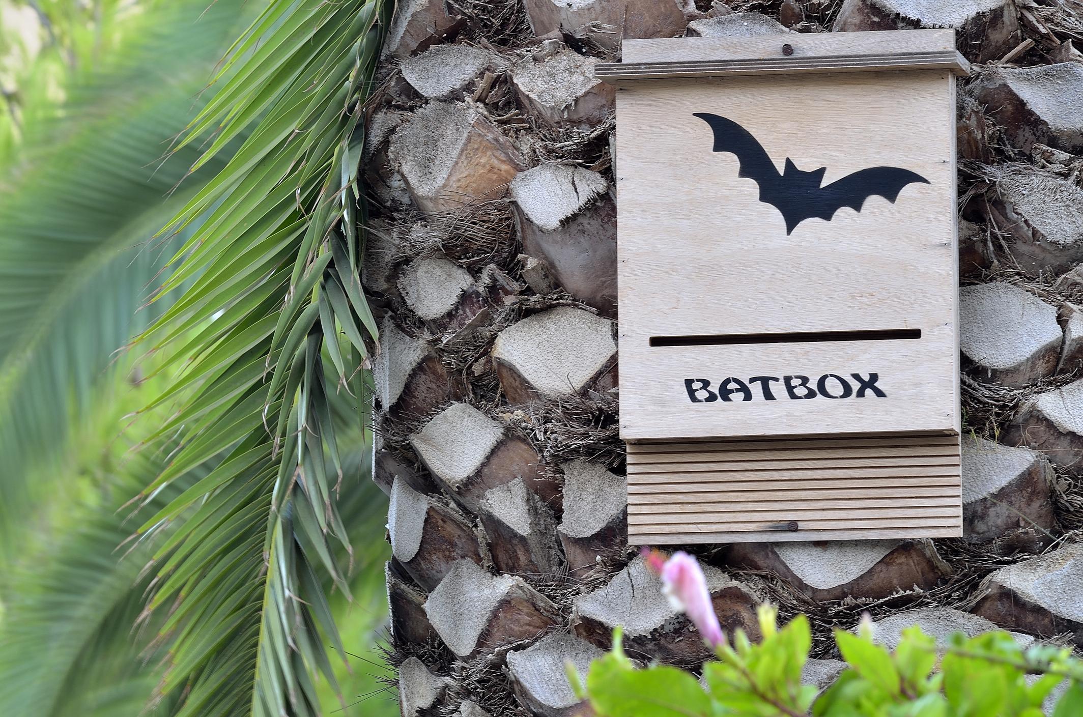 bat-exclusion-bat-box.jpg