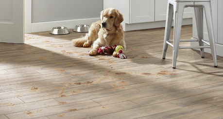dog on wood-look tiles cropped.jpg