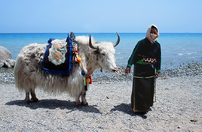 Woman_with_yak_at_Qinghai_Lake.jpg