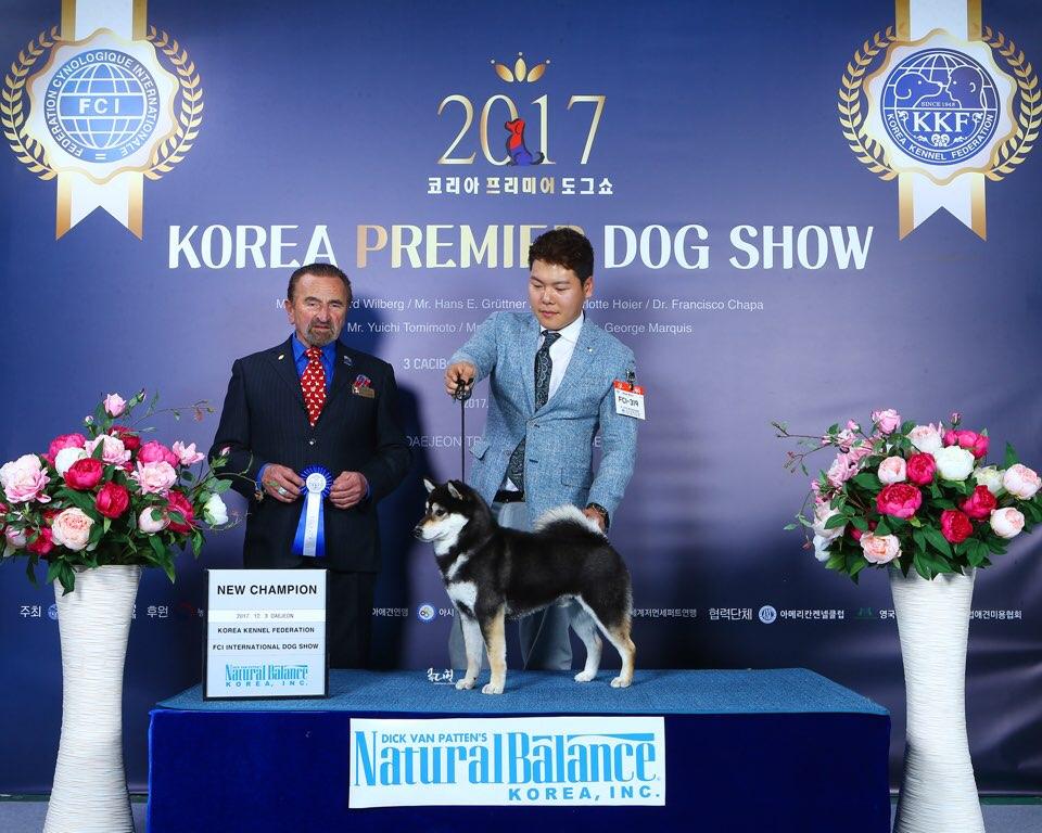 Dog_show1.jpeg