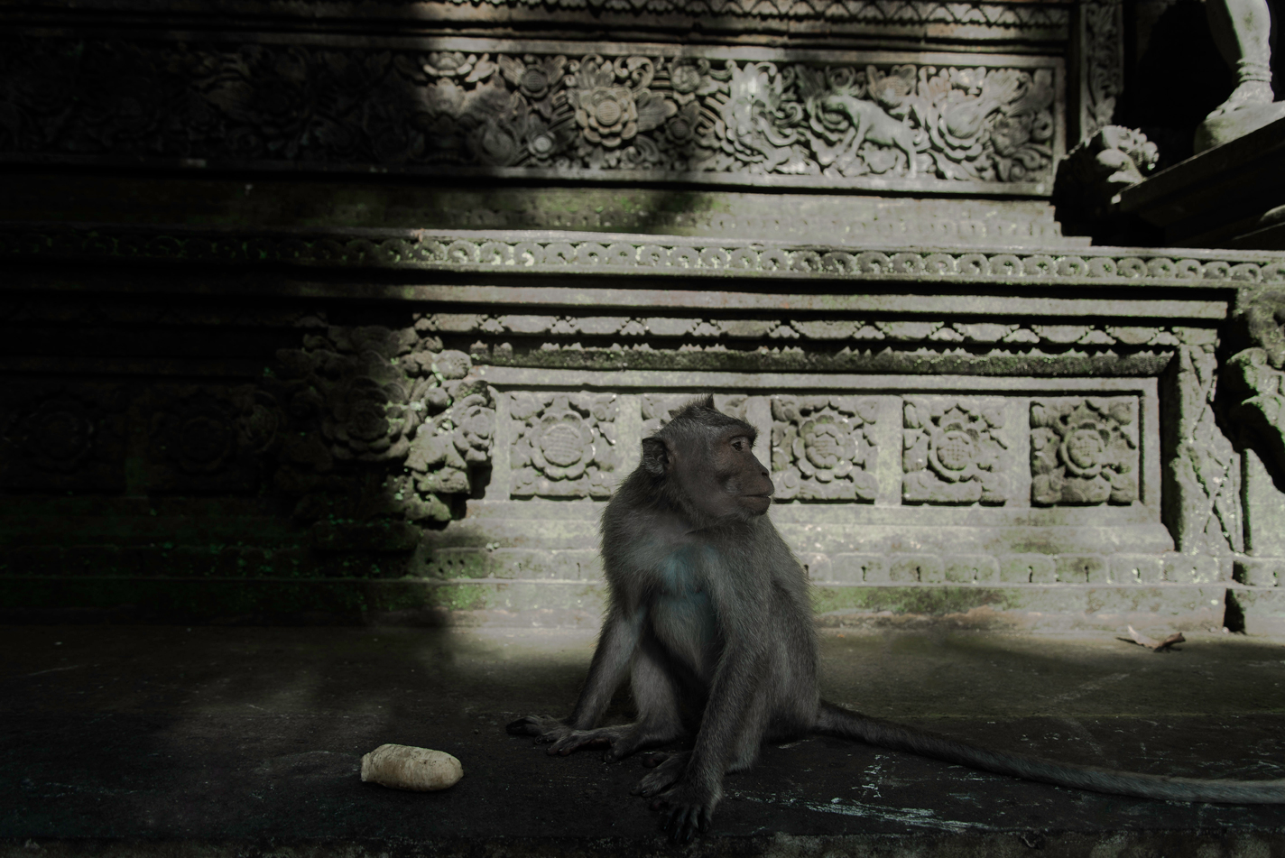 Monkey Forest l Ubud