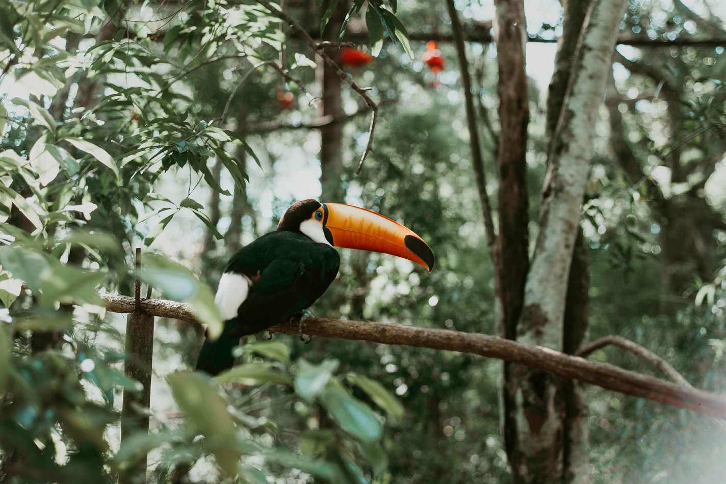 Toucan - Foz do Iguaçu