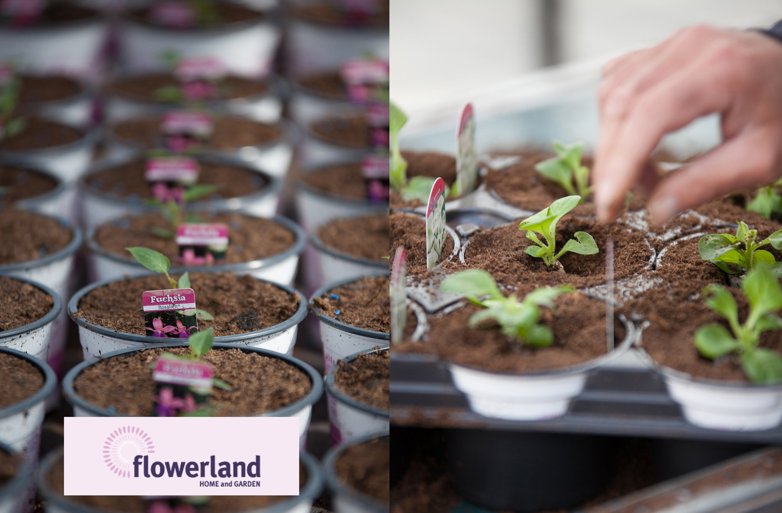 Flowerland 2 _ DLOVE_1.jpg