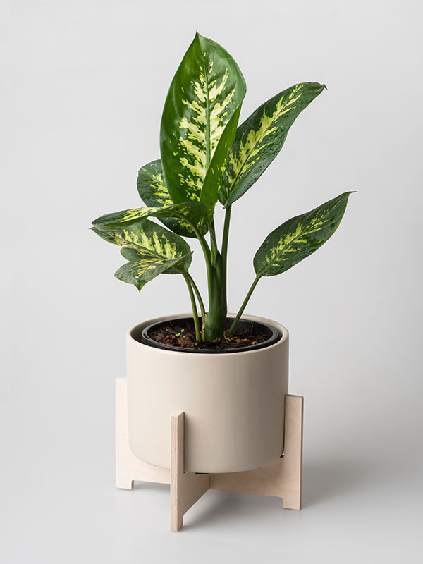 Pot plant - Almost all eco-moms have plants and plants in their homes. You can add to the collection with a beautiful pot plant, complete with plant. Just remember to buy a plant that is suited for indoor life, preferable one that doesn't need a lot of sunshine. This one is from Native Decor