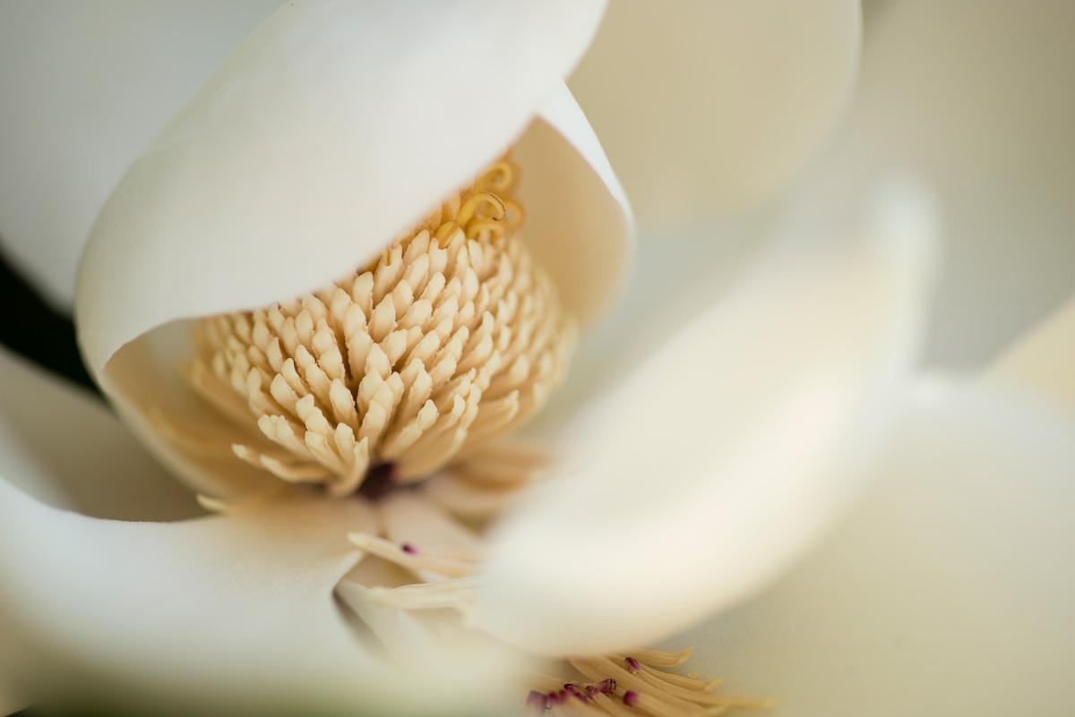 magnolia_web.jpg