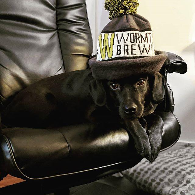 Gotta stay warm out there! 🐶❄️ #swag #blacklabgang #blackonblack #winterwear #dogsofinstagram #dogsinhats #blacklab #dogsofig #puppy #dogsinclothes #brewerydog #wormtown #winterhat #craftbeer #craftbeerlover #brewery #labsofinstagram #dogmodel