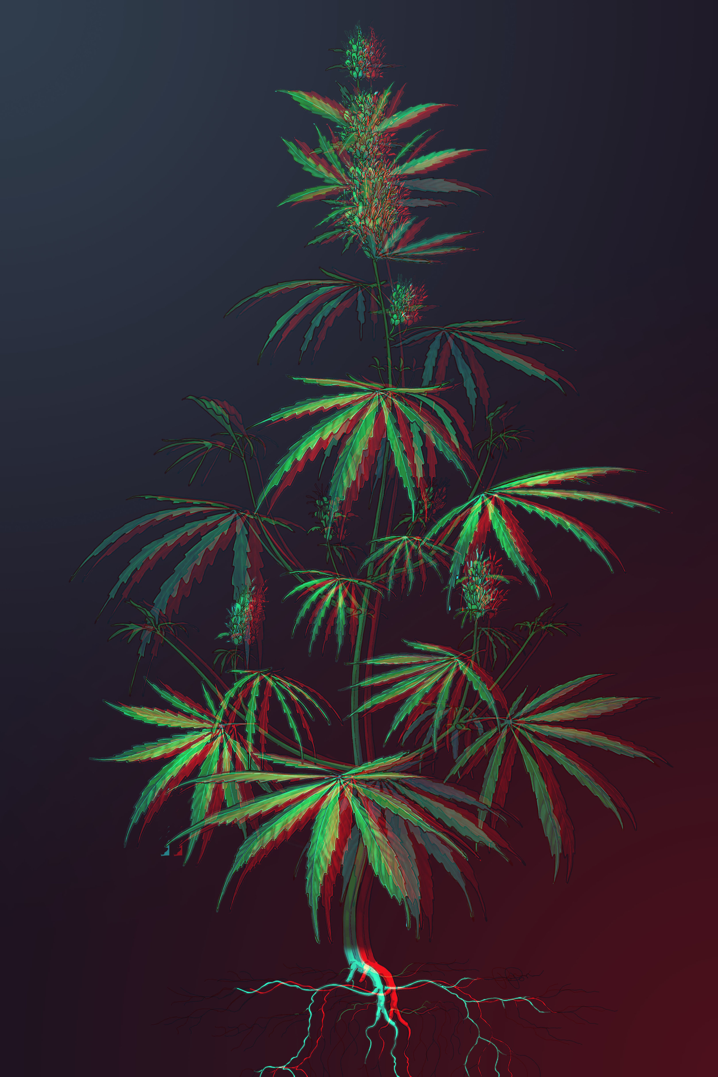 Cannabis sativa 3D.jpg