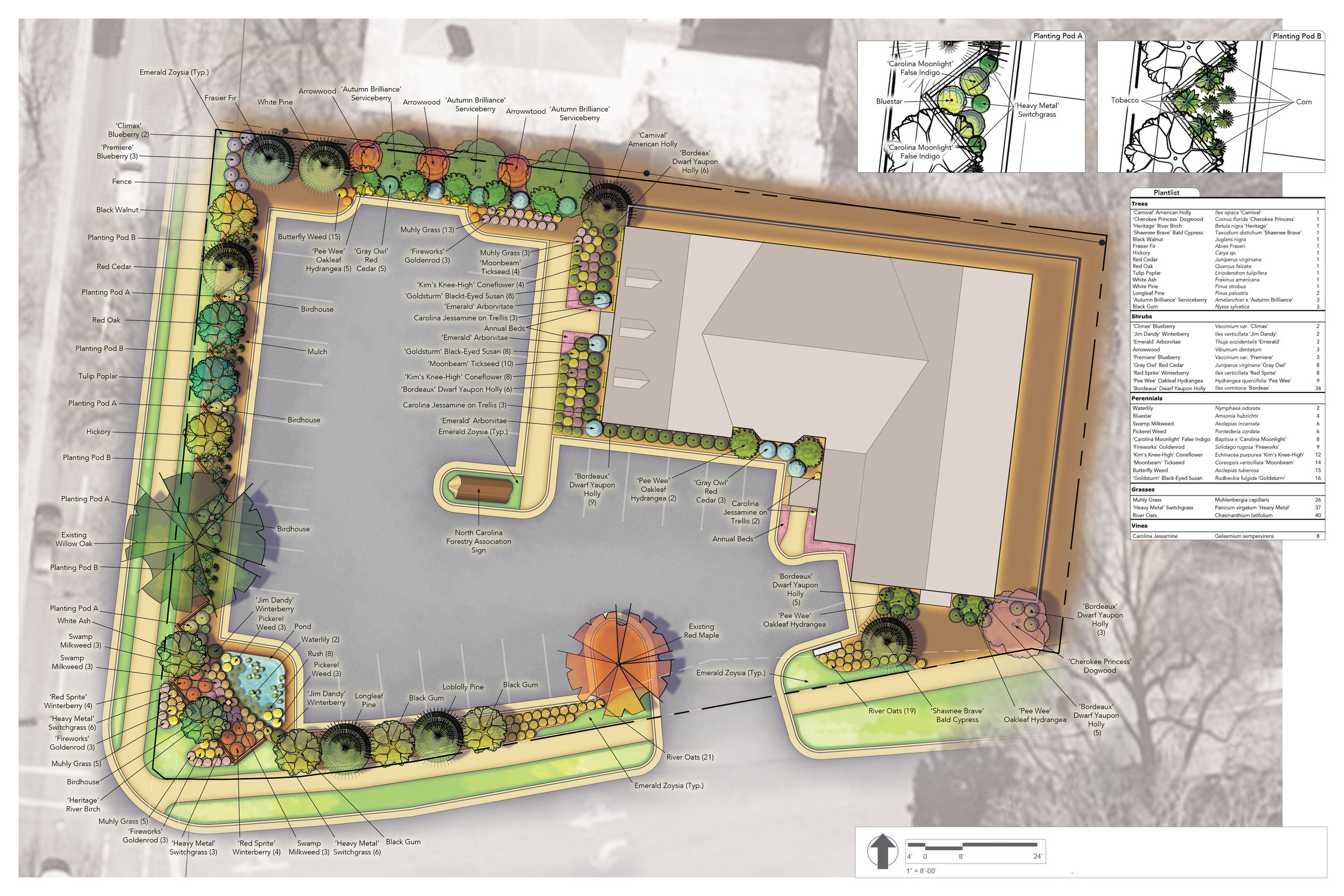 Featured above is a landscape design for the North Carolina Forestry Association headquarters featuring trees, shrubs, grasses and herbaceous perennials historically native to the state. This didactic landscape is arranged from mountain to sea and serves nearby schools as a living classroom. The trees specified in the design are to be cut down and replanted every eight years to demonstrate forestry techniques.