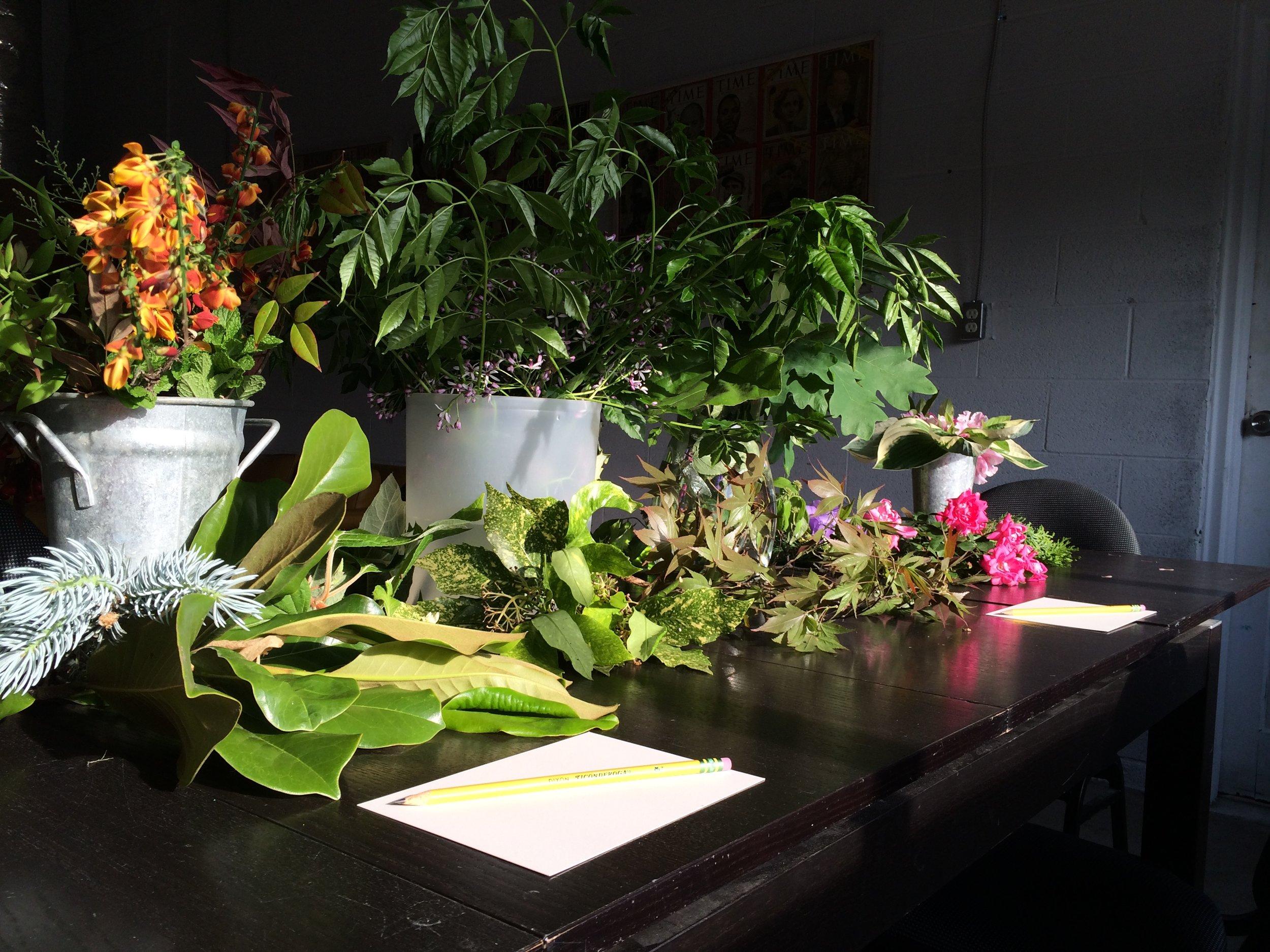 botanical-illustration-class.jpg